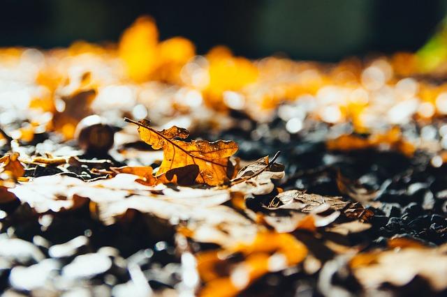 bladeren herfst naar binnen koud
