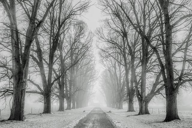 winter sneeuw bomen koude